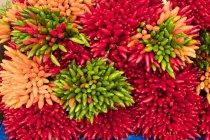 Primer plano de grandes racimos de chiles rojos, verdes y anaranjados frescos en el puesto del mercado . - foto de stock