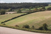 Landscape with field, hedges and forest in countryside in Buckinghamshire, England, United Kingdom. — Stock Photo