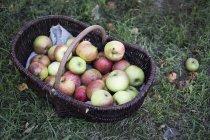 Vue d'angle élevé des pommes fraîchement cueillies dans le panier brun d'osier. — Photo de stock