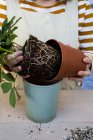 Close-up of person re-potting plant into blue terracotta pot. — Stock Photo