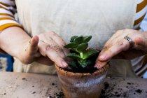 Primo piano della donna che pianta succulente in terriccio in vaso di terracotta . — Foto stock