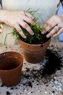 Primer plano de la persona plantando suculentas en tierra de maceta en maceta de terracota . - foto de stock