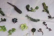 High angle close-up of selection of small succulents on table. — Stock Photo