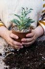 Primo piano di mani di persona che tengono la pentola di terracotta con succulento . — Foto stock