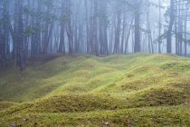 Misty woodland with grass mounds and trees in background. — Stock Photo