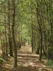 Forest path with trees branches and green foliage — Stock Photo