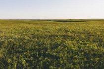 Вид через Tallgrass прейри заповедника весной с пышной травой в Великих равнинах, Канзас, Сша. — стоковое фото