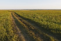 View across Tallgrass Prairie Preserve in spring with lush grass and tracks in Great Plains, Kansas, USA. — Stock Photo