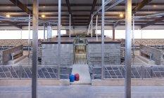 Intérieur d'étable dans la ferme de bétail de Jarva, Estonie — Photo de stock