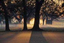 Деревья в утреннем тумане с подсветкой в сельской местности — стоковое фото