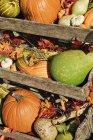 Осенние тыквы и овощи в деревянных ящиках на открытом воздухе — стоковое фото