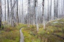 Pazifischen Kammweg Feuer beschädigt subalpinen Wald, Mount Adams Wildnis, Gifford Pinchot National Forest, Washington, Vereinigte Staaten — Stockfoto