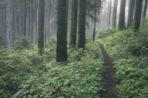 Pacific Crest Trail extending through lush and green forest, Gifford Pinchot National Forest, Washington, USA — Stock Photo
