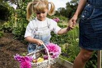 Ragazza che tiene il cesto con Dahlias rosa che cammina mano nella mano con la donna attraverso il giardino . — Foto stock