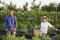Homem japonês vestindo boné e mulher usando chapéu em pé no campo vegetal, sorrindo na câmera . — Fotografia de Stock