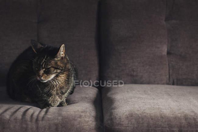 Chat assis sur un canapé gris — Photo de stock