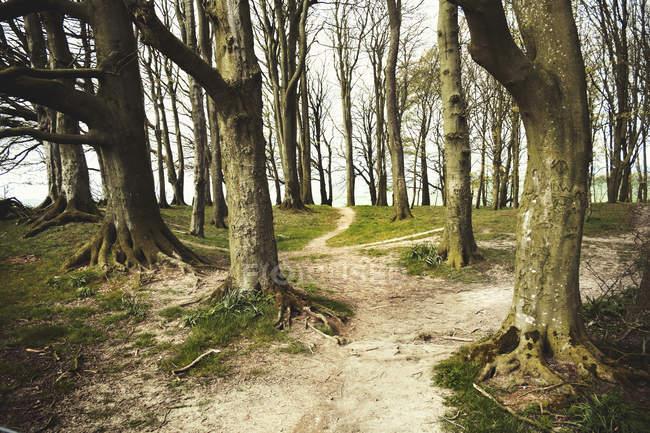 Древний путь Риджуэй через графство Беркшир — стоковое фото
