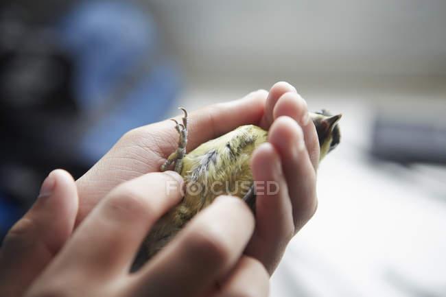 Молода дівчина, тримаючи невеликих диких птахів — стокове фото