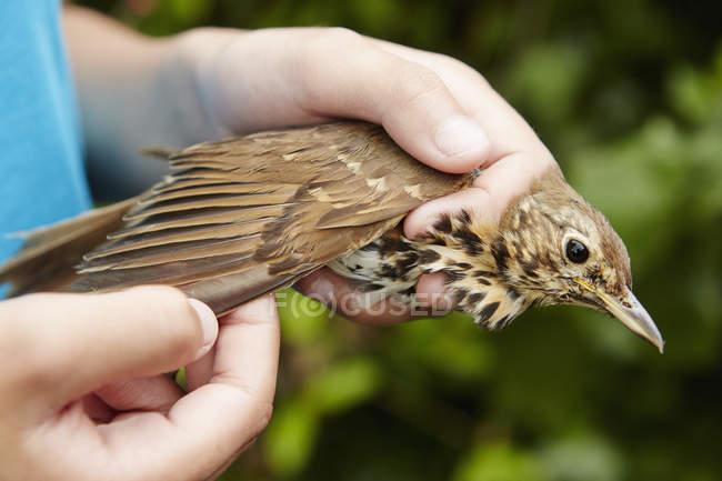 Дівчинка тримає диких птахів — стокове фото