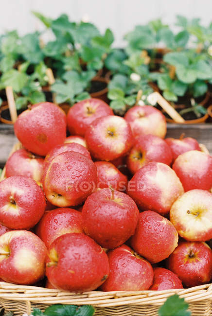 Fresh apples with water droplets — Stock Photo