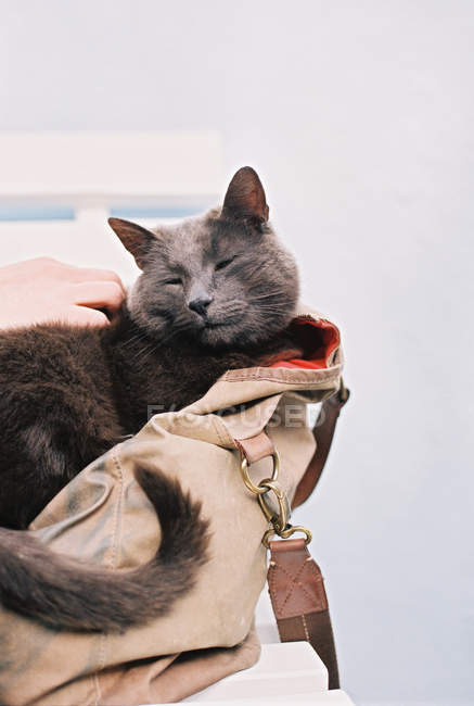 Small grey cat — Stock Photo