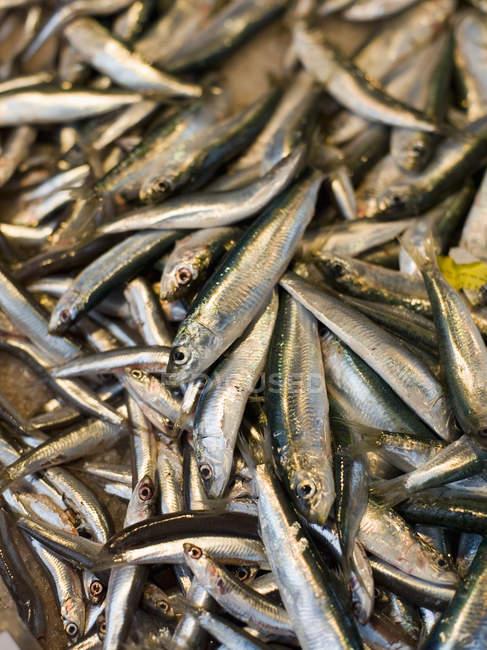 Свіжа риба на стійла — стокове фото