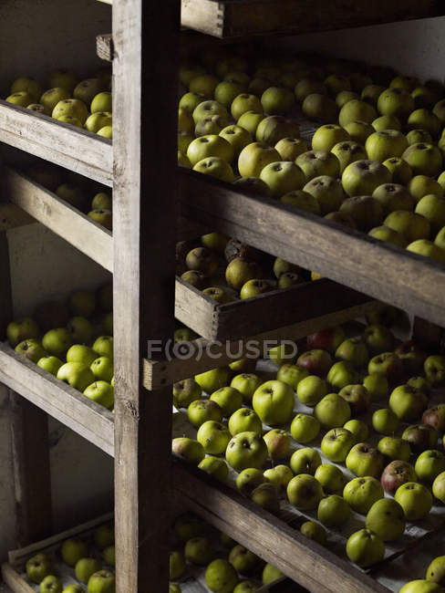 Green apples arranged in rows — Stock Photo