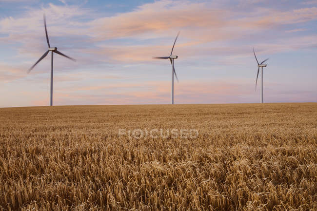 Wind turbines at dusk in a field — Stock Photo