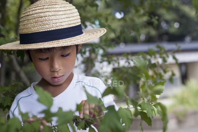 Japanischer Junge schaut auf einen Ast. — Stockfoto