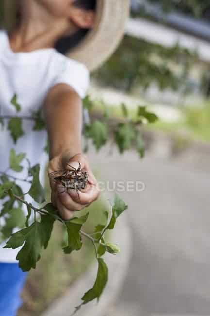 Giapponese ragazzo holding un coleottero . — Foto stock
