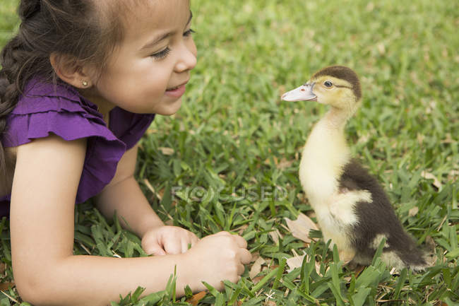 Girl looking closely at a young duckling — Stock Photo
