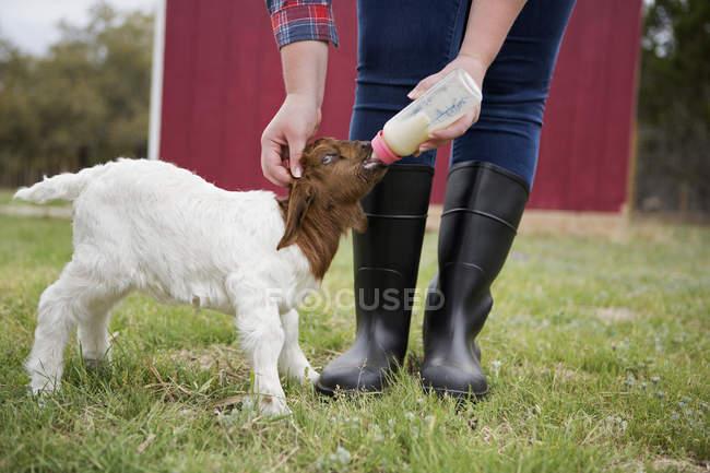Fille bouteille nourrir un bébé chèvre . — Photo de stock