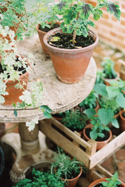 Plants and seedlings in clay pots — Stock Photo