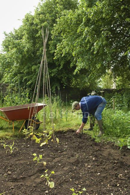 Человек посадил бобы — стоковое фото