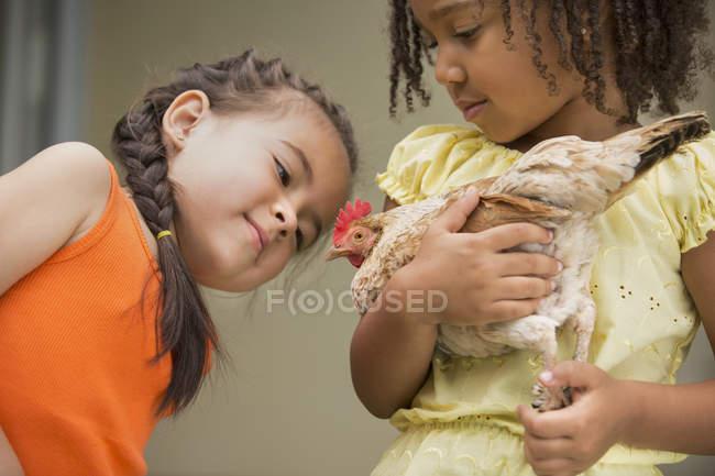 Дівчата тримають курка — стокове фото