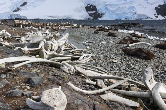 Wale Knochen verstreut am Strand — Stockfoto