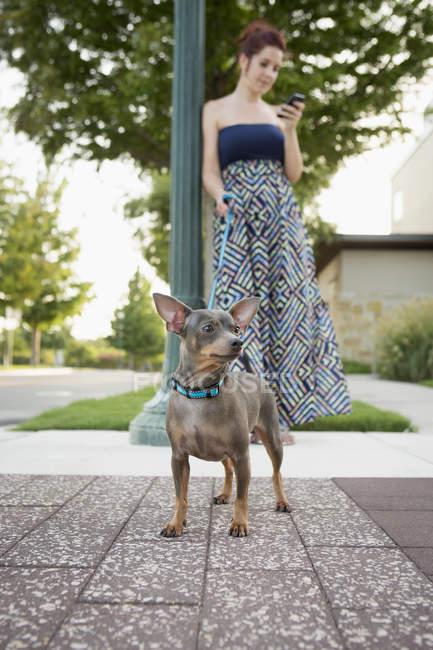 Femme avec un petit chien. — Photo de stock