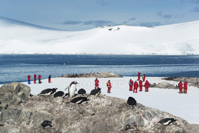 People looking at a small colony of Penguins — Stock Photo