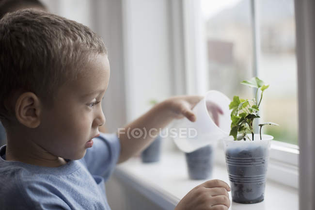 Boy watering young plants — Stock Photo