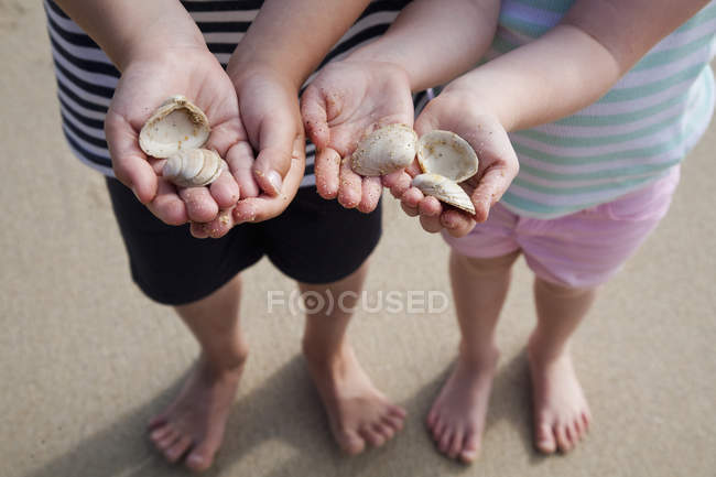 Hands holding sea shells. — Stock Photo