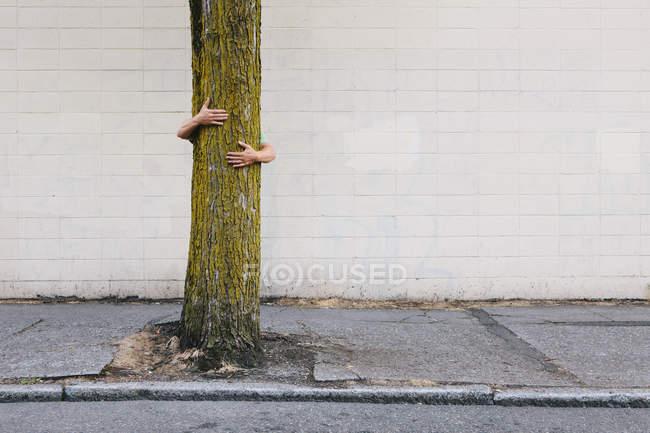 Man hugging tree — Stock Photo