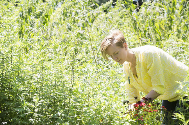 Young woman in flower beds — Stock Photo