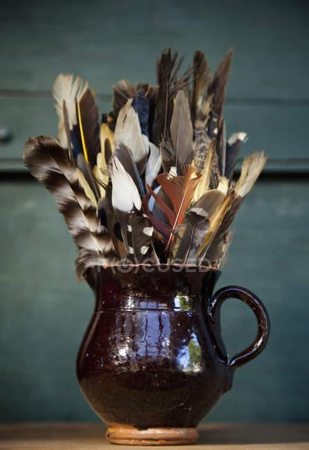 Колекція пір'я птахів — стокове фото