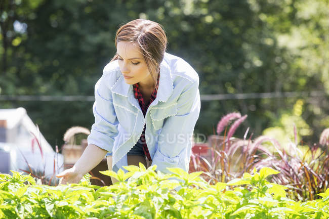 Woman standing in a garden — Stock Photo