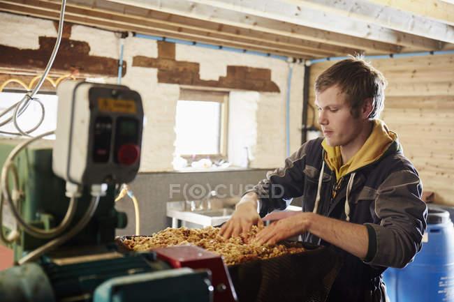 Man processing cider apples — Stock Photo