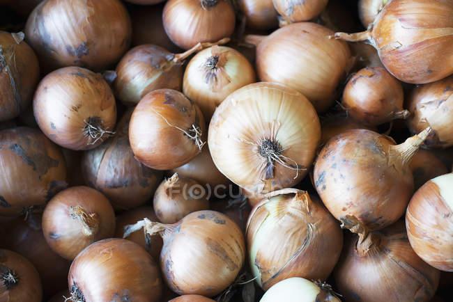 Органический желтый лук — стоковое фото