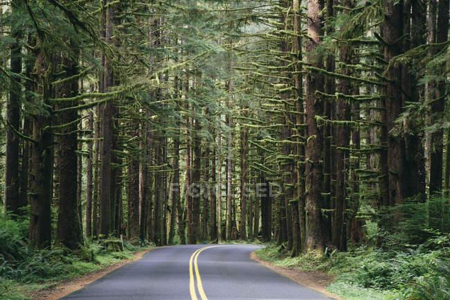 Дорога, обмотка через пышные — стоковое фото