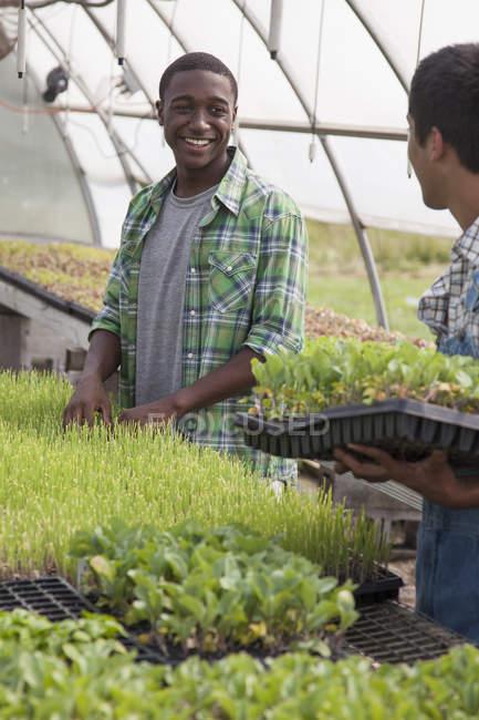 Hombres que trabajan en un gran invernadero - foto de stock