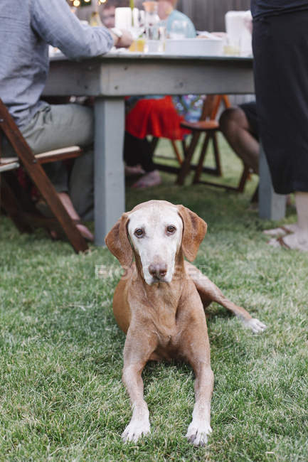 Dog lying on the grass at table — Stock Photo