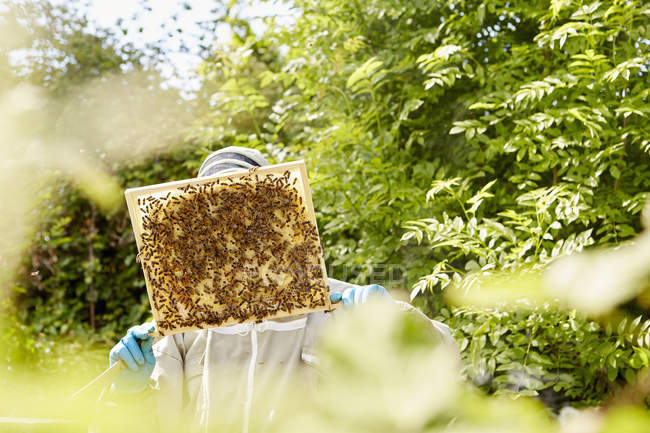 Beekeeper checking a honeycomb — Stock Photo